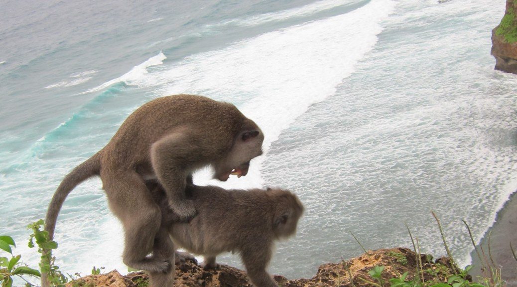 Where do baby monkeys come from? | Monkey Sex in Ulu Watu, Bali, Indonesia