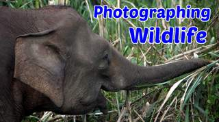Photographing Wildlife!