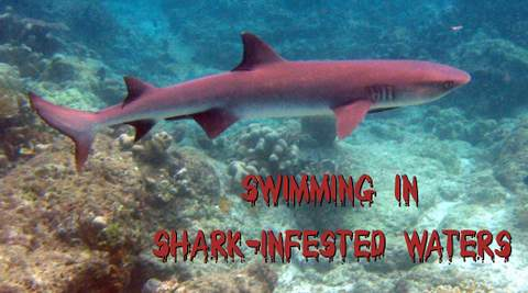 Swimming in Shark infested waters!