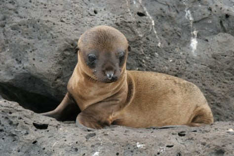 Seeing Baby Sea Lions is on my 2016 travel bucket list
