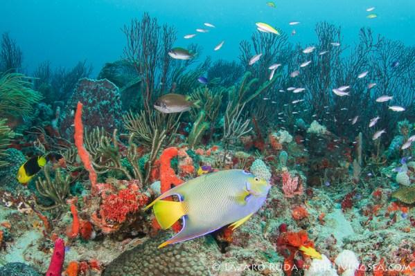 Palm Beach coral reef