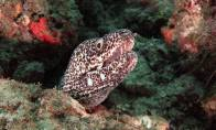 Friendly Spotted Moray Eel checking us out.