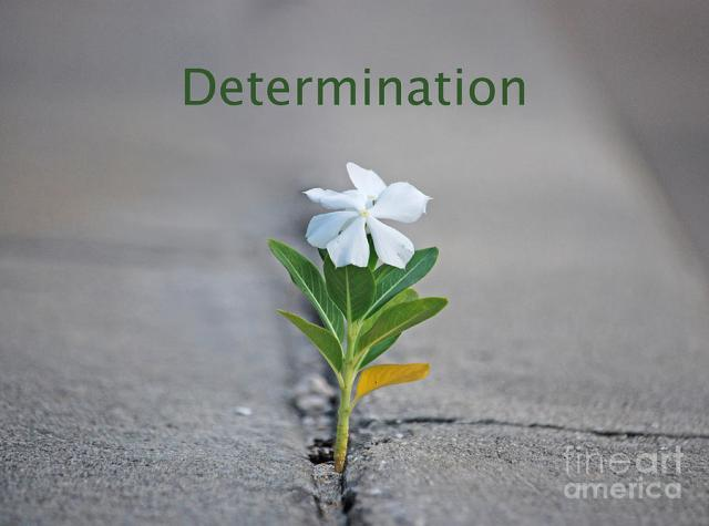 88-determination-joseph-keane