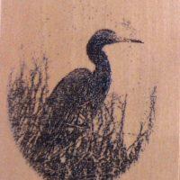 Shakertown Bird in Marsh