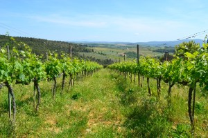 walks of Italy Tuscany tour review
