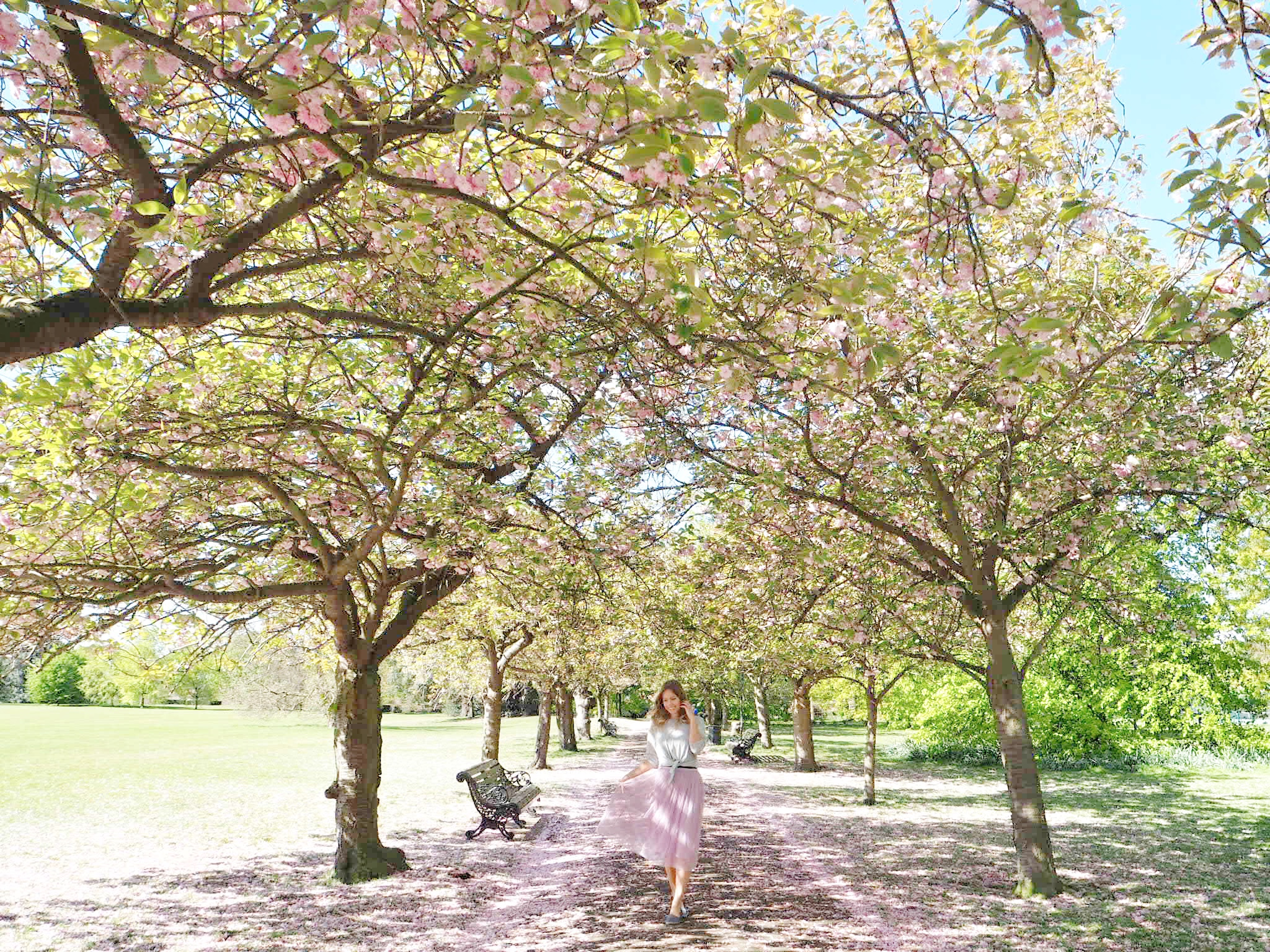 Cherry Blossom Avenue in Greenwich Park