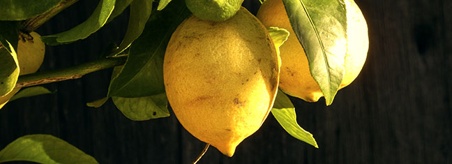 Photo d'un citronnier en pots du jardin remarquable L'Escalier à Brumath