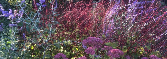 Couleurs de septembre dans la plate-bande de fleurs vivaces du potager