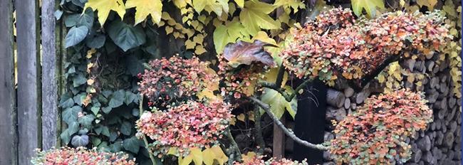 La même entrée aux couleurs d'automne