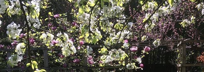 Photo des floraisons au verger