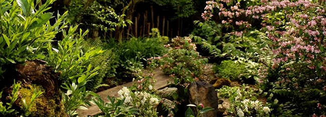 Le jardin zen au printemps