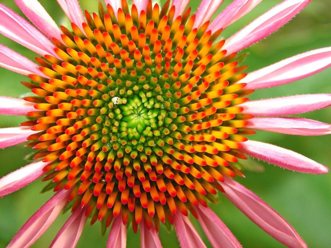 virág-mandala