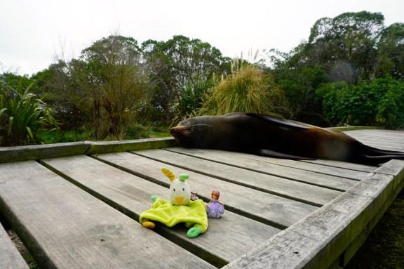 Nouvelle-Zélande, Kaikoura, avec un phoque