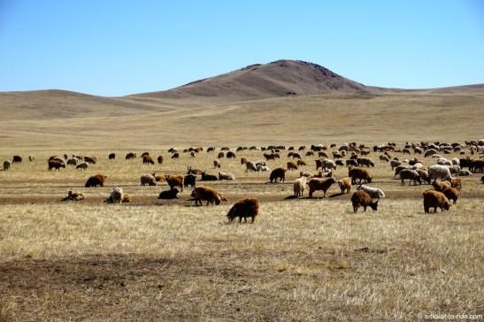 Mongolie, Baga Gazryn Chuluu