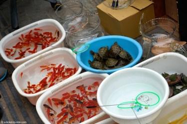 Chine, Pékin, vente de poissons rouges