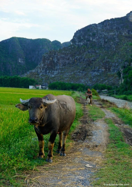 Vietnam, Tam Coc, dans les rizières