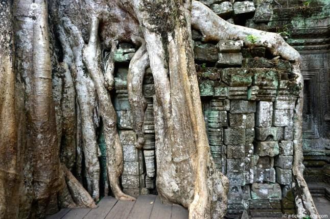 Cambodge, Angkor, Ta Prohm