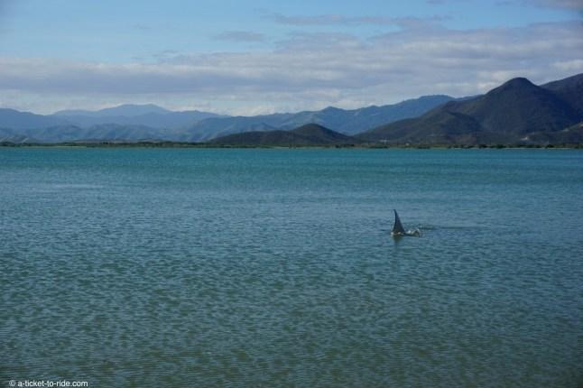Nouvelle-Calédonie, plage de Gatope avec raie manga