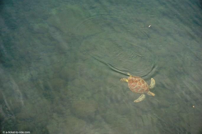 Nouvelle-Calédonie, tortue
