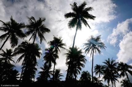 Nouvelle-Calédonie, palmeraie