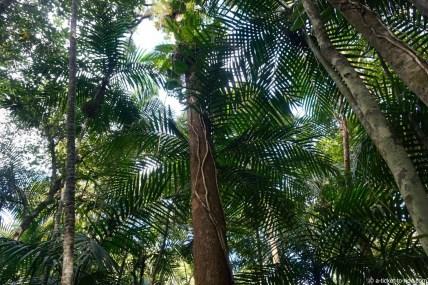 Nouvelle-Calédonie, Farino, parc des Grandes Fougères