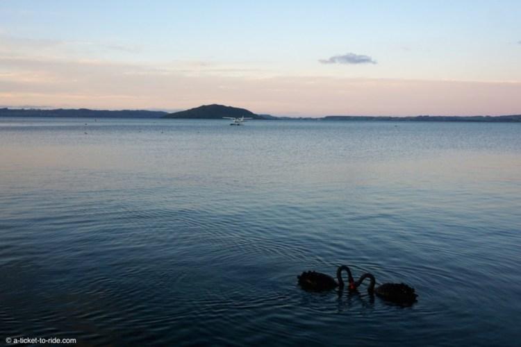 Nouvelle-Zélande, Rotorua, lac