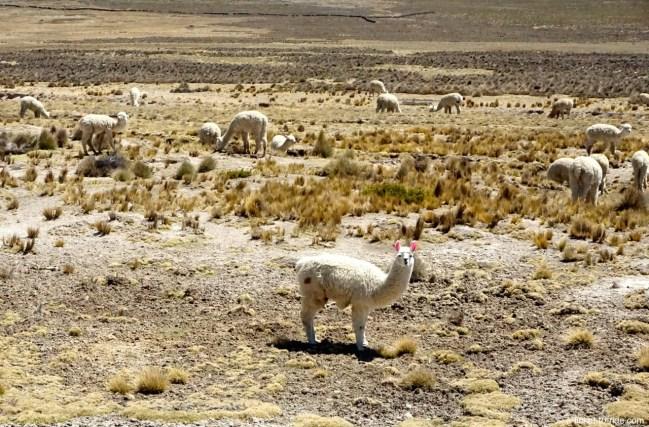 Pérou, sur la route du canyon de Colca