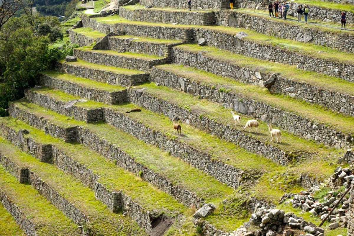 En marche vers le Machu Picchu