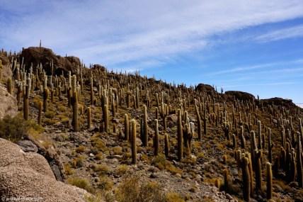Bolivie, Salar d'Uyuni, Isla Incahuasi