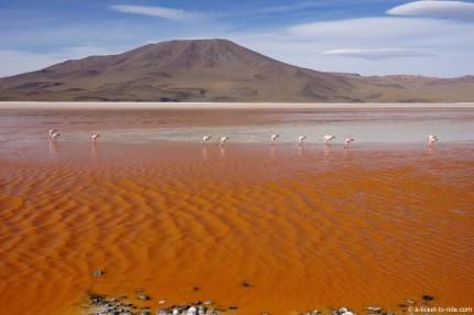 Bolivie, sud Lipez, laguna colorada