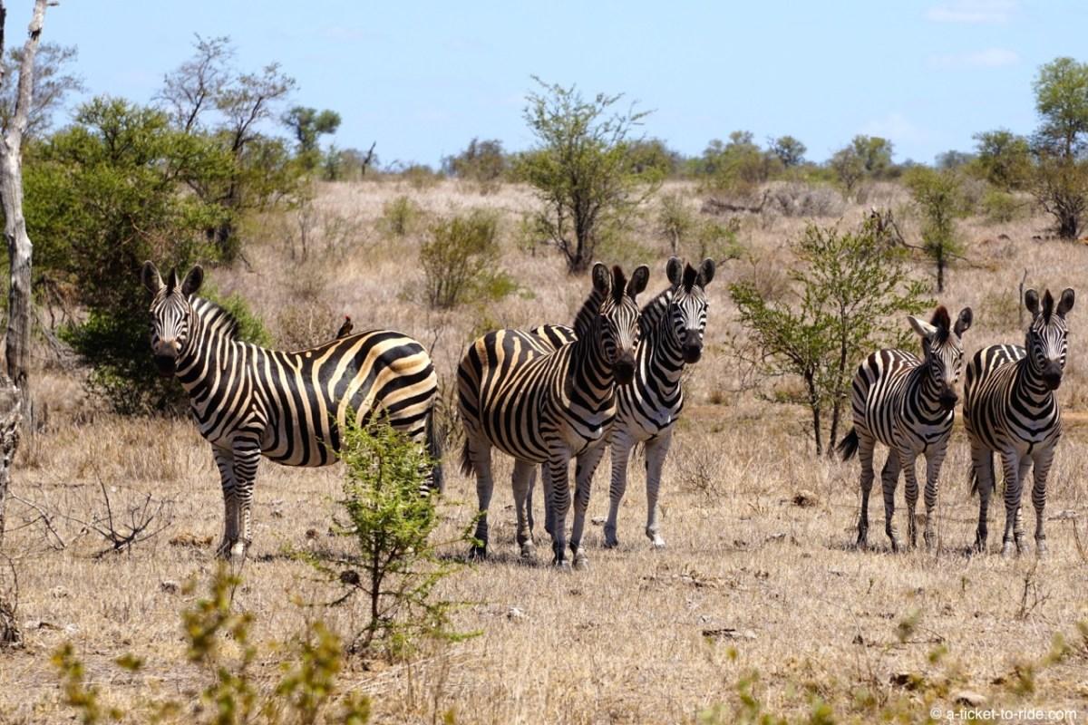 Réussir son safari au Parc Kruger