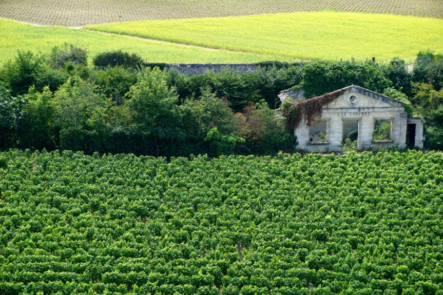 France, Saint-Emilion, vignes