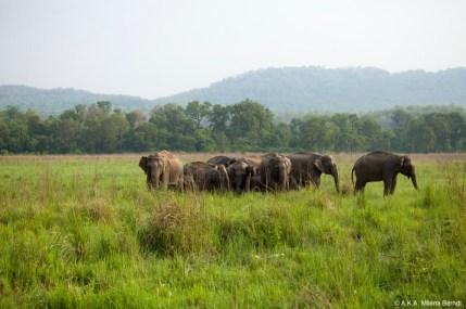 Inde, Corbett tiger reserve