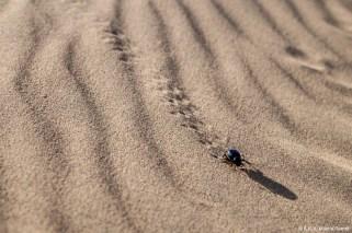 Inde, désert du Thar