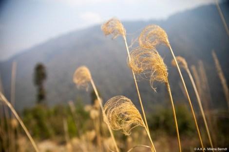 Inde, trek Himalaya