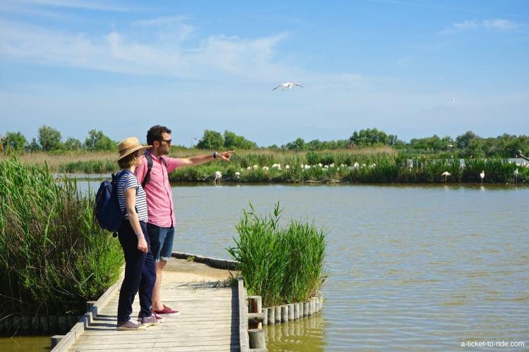 camargue-parc-ornithologique-pont-de-gau