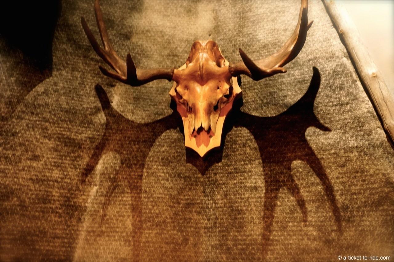 Laponie, crâne de renne