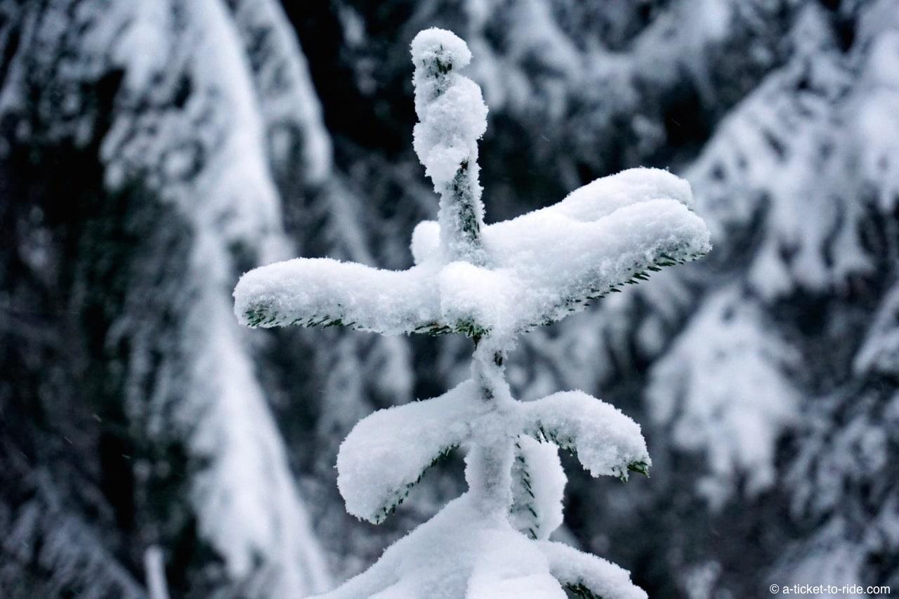 Laponie finlandaise, paysage enneigé