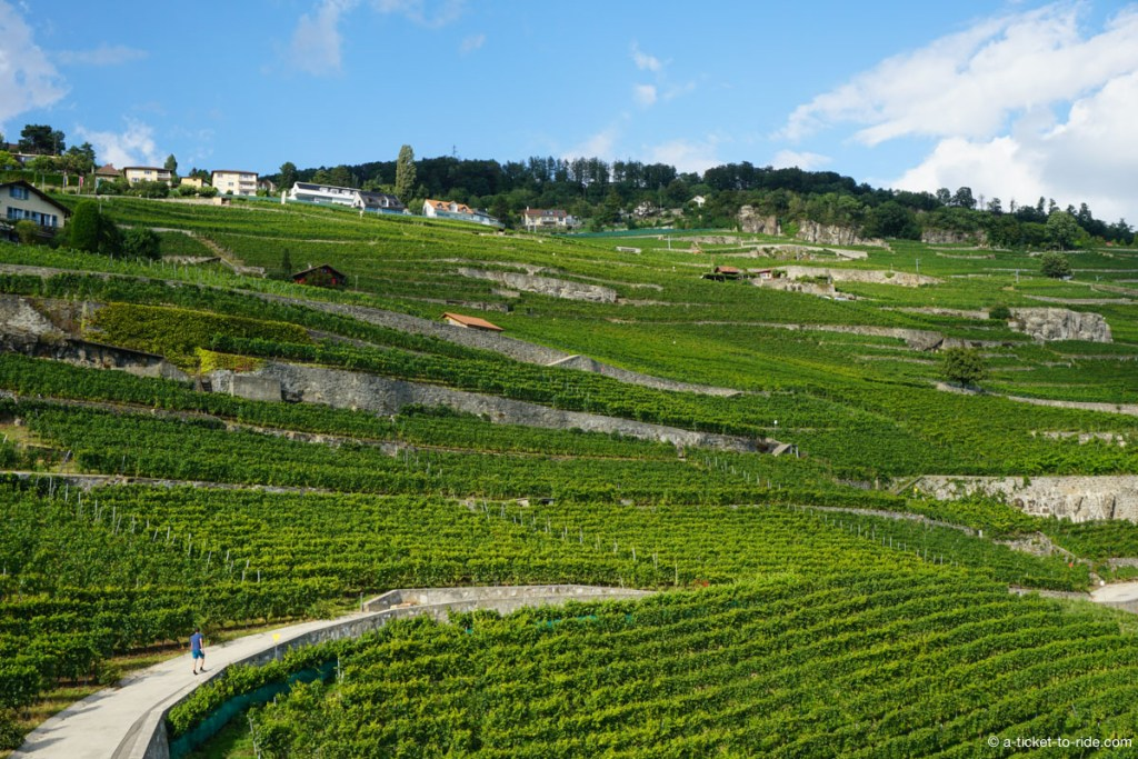 Vignes en terrasses de Lavaux