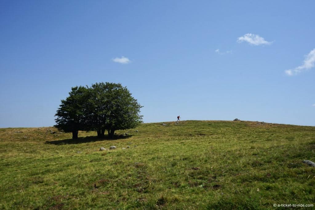 Aubrac, chemin de St-Guilhem