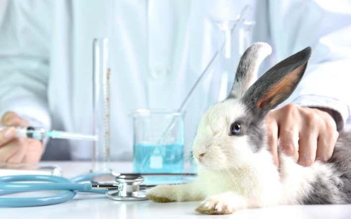 Çin'in Zorunlu Hayvan Testleri Son mu Buluyor?