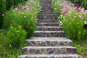 rock stairs surrounded by beautiful flowers