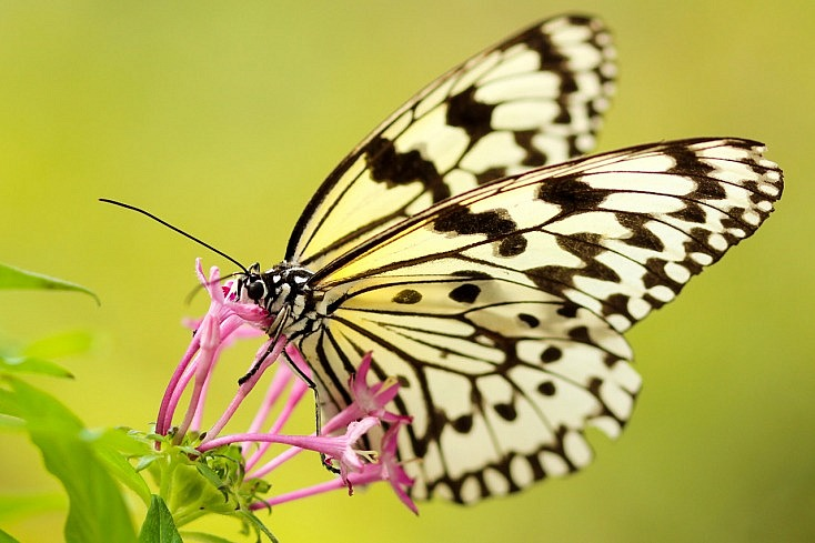 fotografia-hobby-mariposa-amcro-734x489