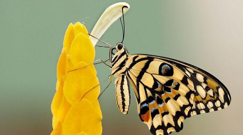 10 Consejos Determinantes para Fotografiar Insectos