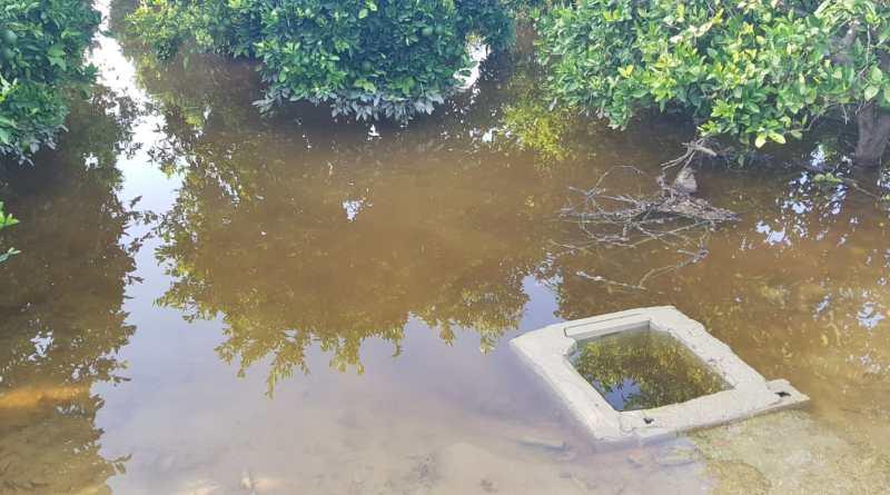 La Dana/gota fría causa pérdidas de 550 millones de euros al Sector Agroalimentario Alicantino y ASAJA exige ayudas directas e inmediatas para los productores