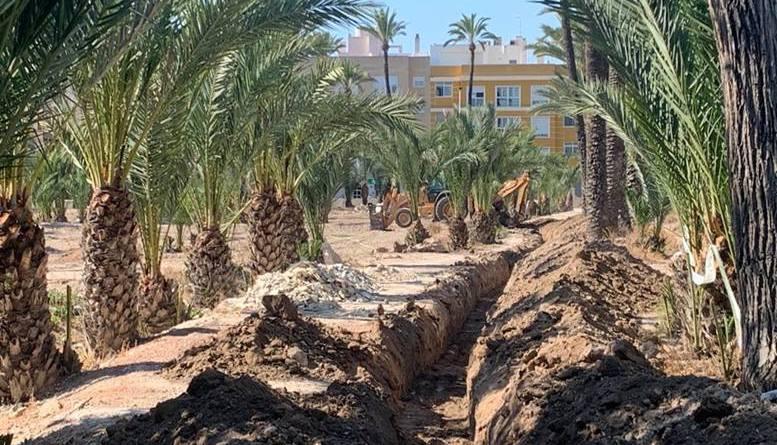 El Ayuntamiento de Elche habilitará 39 parcelas en el Hort de Felip para su uso agrícola