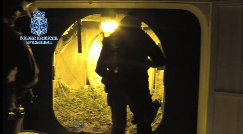Policia nacional cultivo marihuana