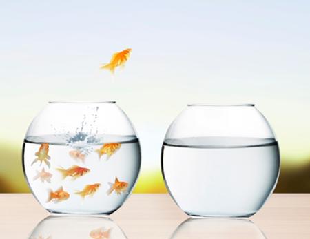 goldfish visual persuasion