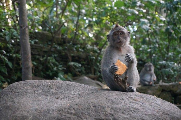 monkey-forest-ubud-bali-min