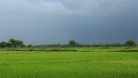 dark skies green fields